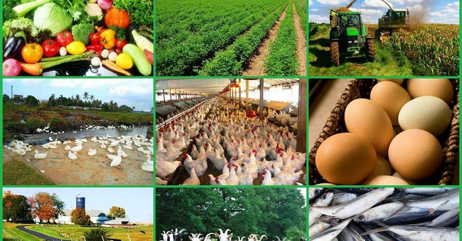 Food Security: Nigerian Government to distribute agricultural inputs to farmers